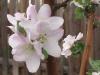 blooms01.jpg