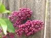 blooms02.jpg