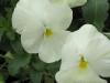 blooms03.jpg