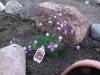 blooms04.jpg