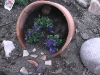 blooms06.jpg