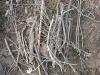 deforest02.jpg