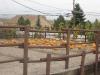 lilpumpkins06.jpg