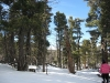 snowshoe24.jpg
