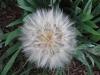 weeds01.jpg